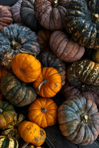 heirloom-pumpkins-300