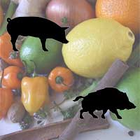 Jamaican Jerk Marinade for Pork | Wild Boar